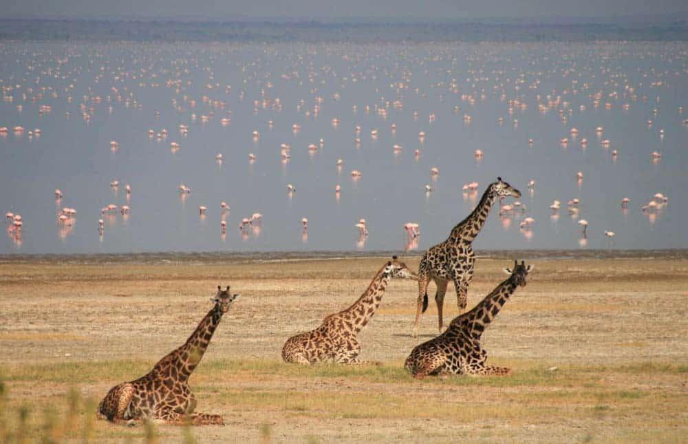 2-Best-of-tanzania-lodge-safari