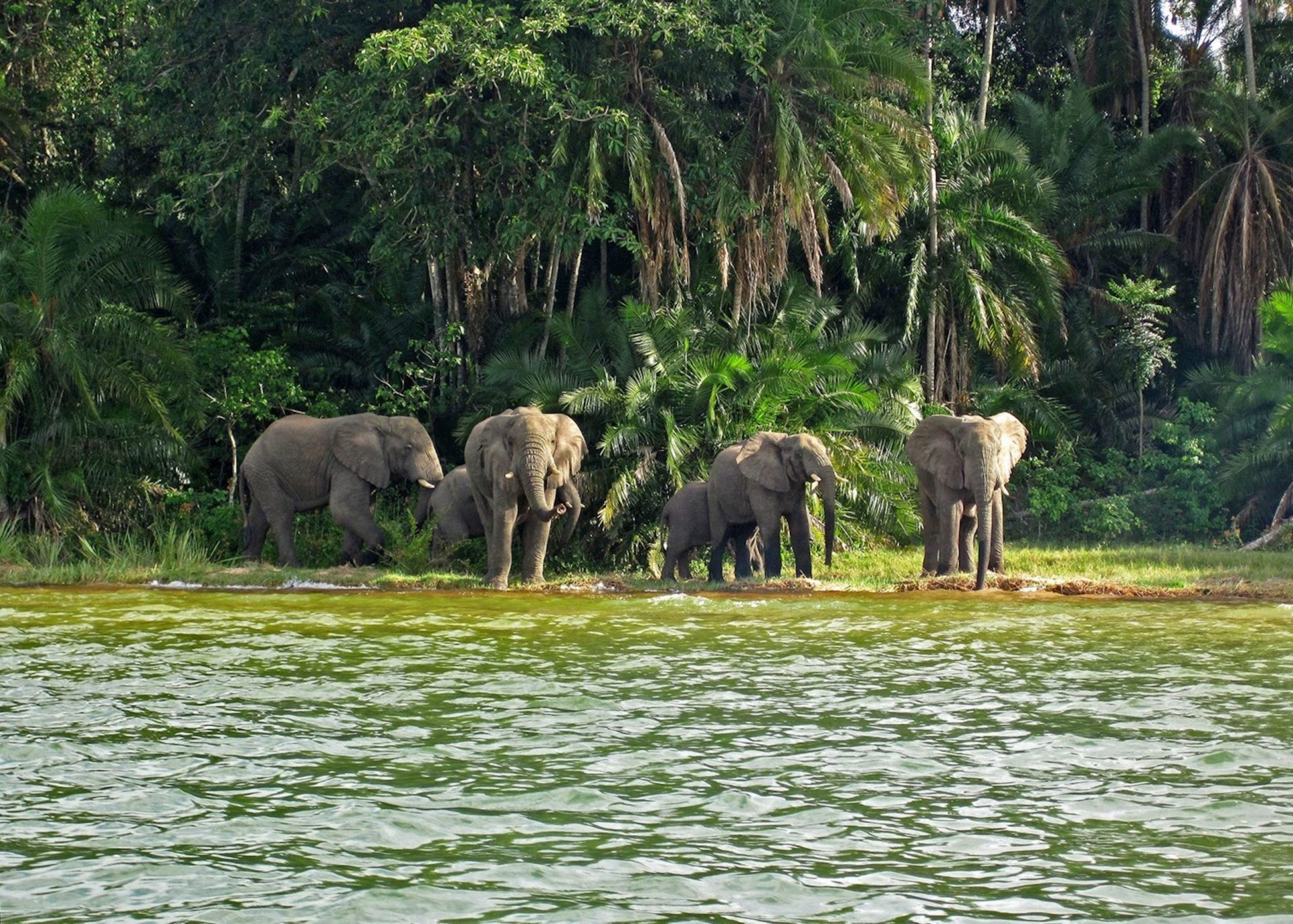489962 elephants on rubondo island lake victoria scaled e1628751854274