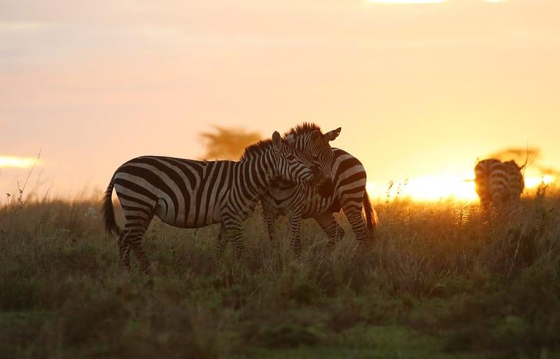 Safaris-in-Tanzania