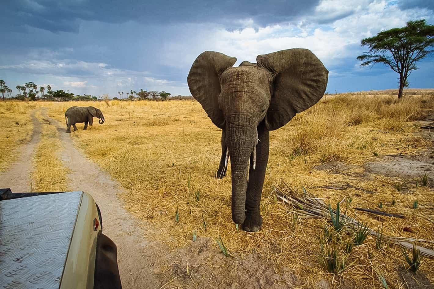 Tanzania Ruaha National Park Game Drive Wildlife Elephants Timbuktu Travel