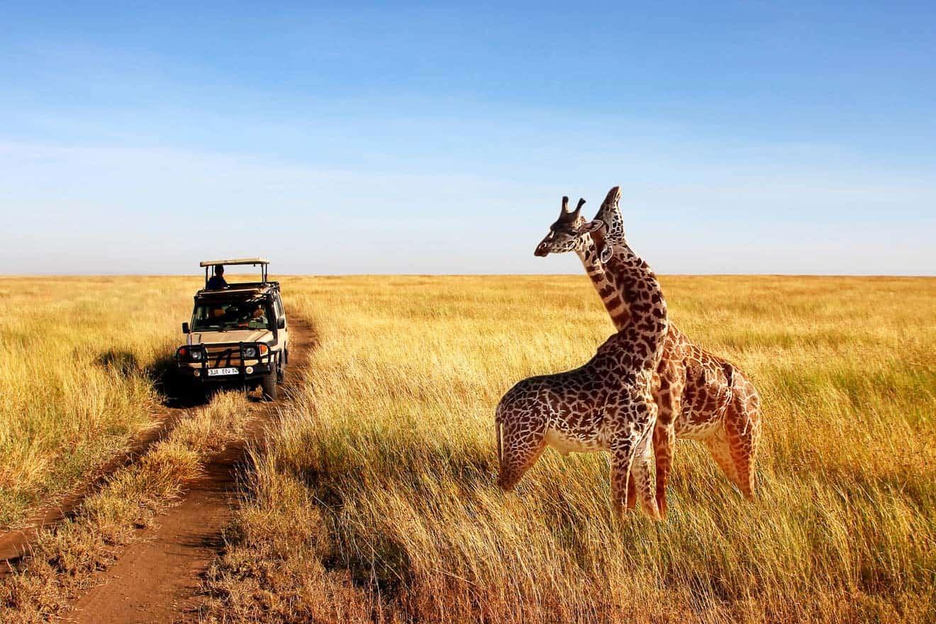 Tanzania-safaris...
