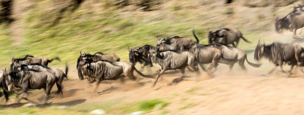 Wildebeest Migration Safari in June