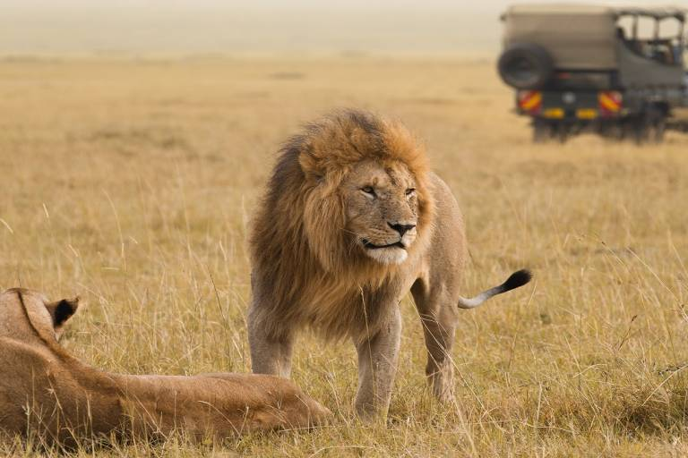 ravels-African-lion-couple-and-safari-jee