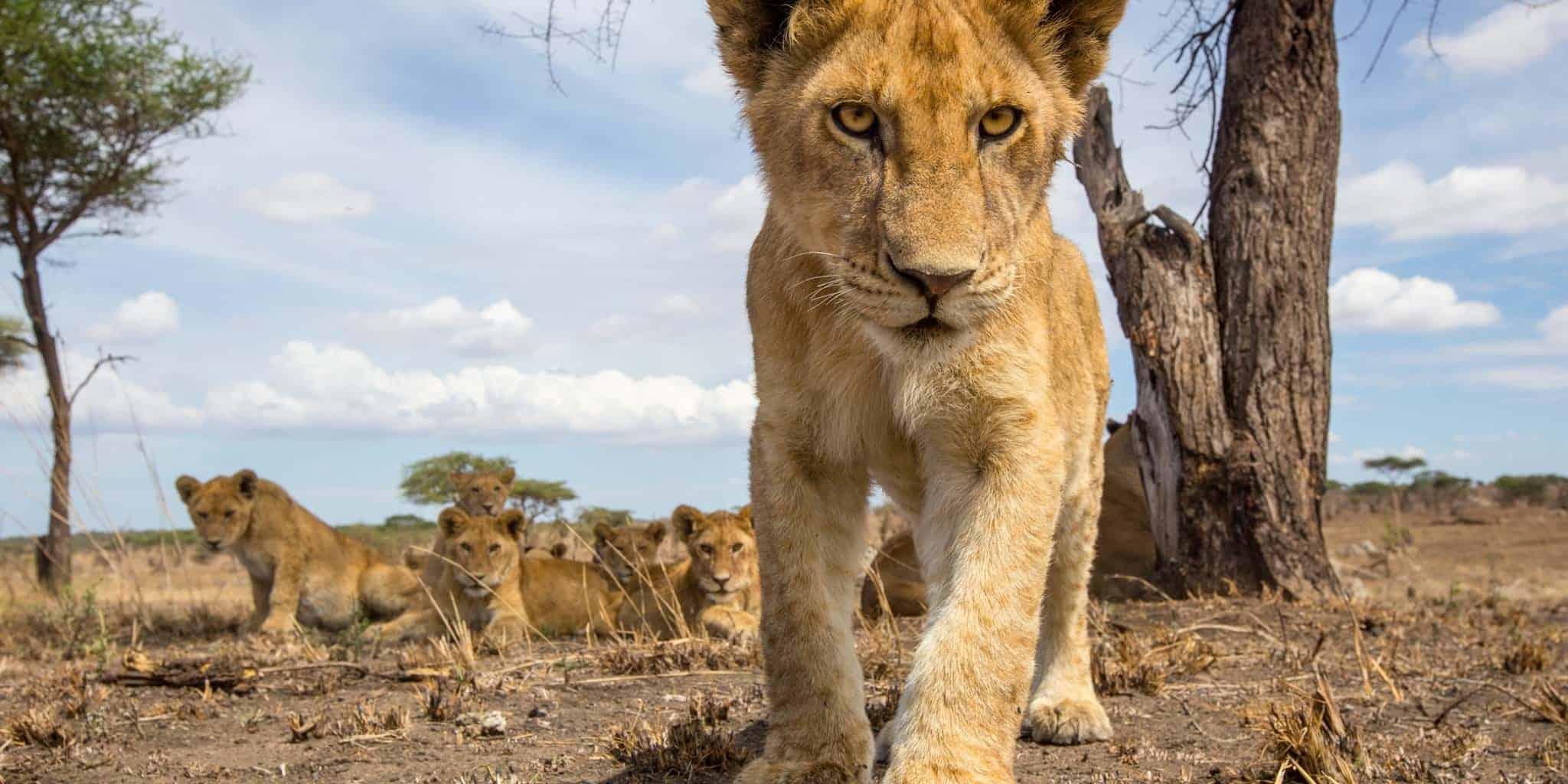 serengeti-8
