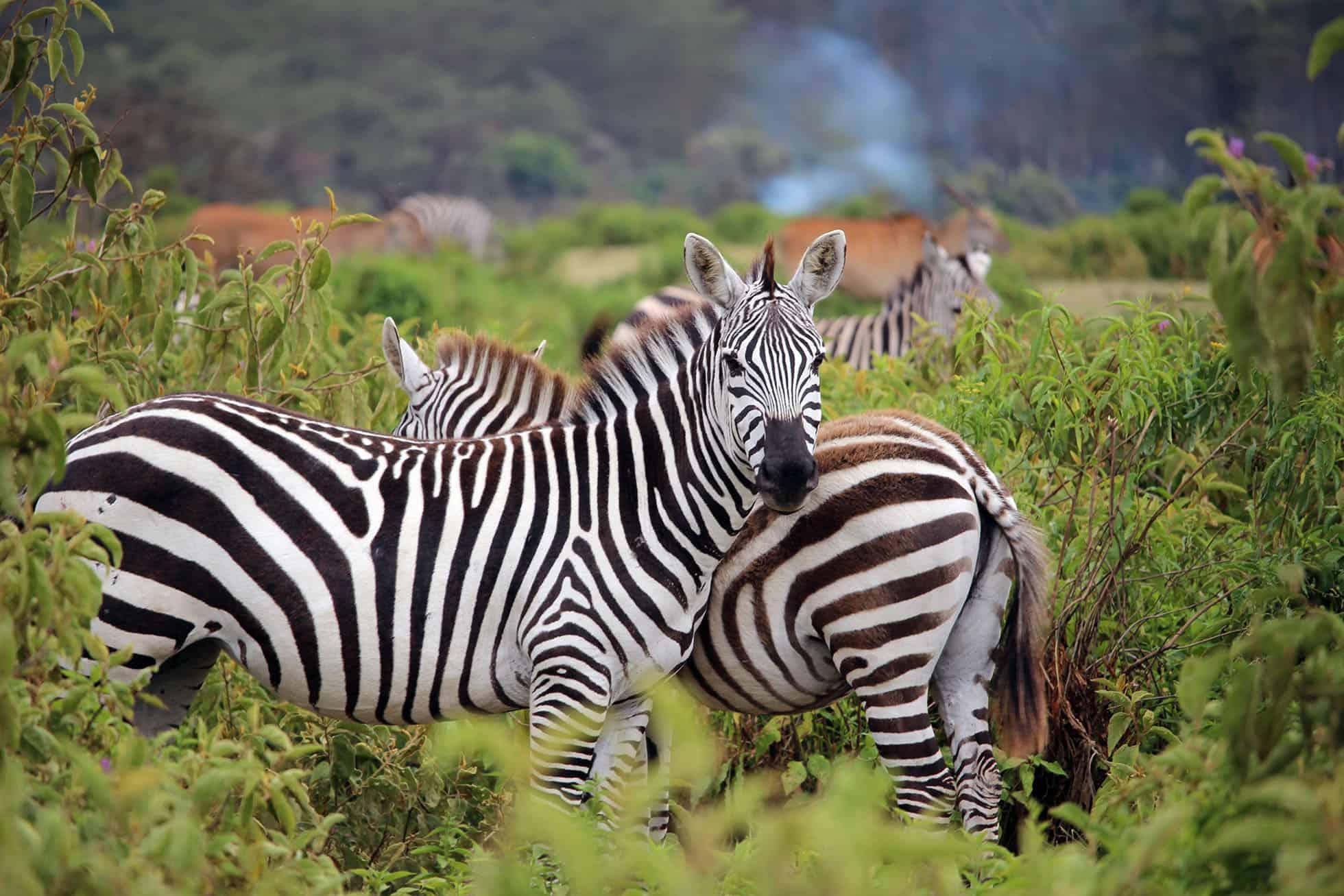 tanzaniasafaris